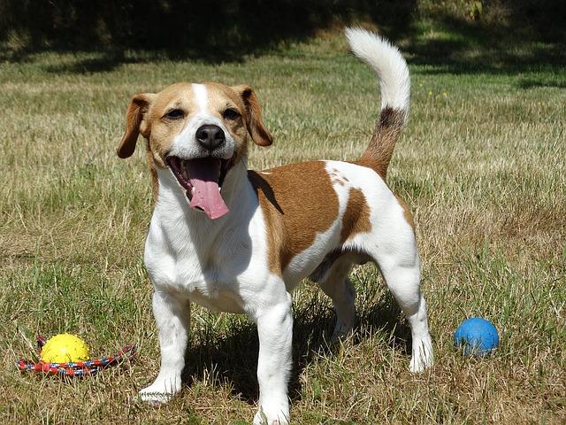 Poradíme, jak vybrat správné psí plemeno do rodiny